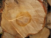 Timber Wholesale and Logistics
