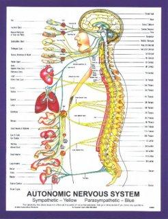 Chiropractic in Ballsbridge Dublin
