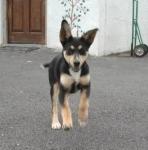 Irish Pets!