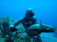 Spearfishing Dublin Club