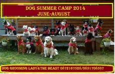 Dog summer camp