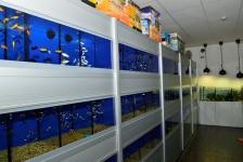 Aquatics Shop Bowwow in Dublin & Online