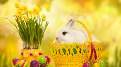 Happy Easter to all 1000sADS users and friends