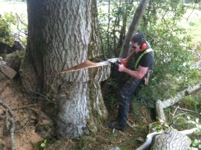 Elite Tree Services Provides Expert Tree Surgeon in Dublin