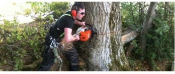 Elite Tree Services Provides Expert Tree Surgeon in Dublin